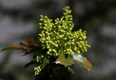 Κίτρινο λουλούδι, φυσική ανθοδέσμη, μακρο φωτογραφία στοκ φωτογραφίες