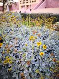 Κίτρινο λουλούδι χρώματος κάτω από το ηλιοβασίλεμα στοκ εικόνες