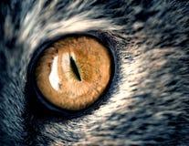 Κίτρινο μάτι γατών κινηματογραφήσεων σε πρώτο πλάνο με την γκρίζα γούνα Στοκ Εικόνες