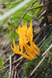 Μανιτάρι, μύκητας στο δάσος στο φθινόπωρο Στοκ Εικόνα