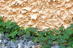 κίτρινο μικρό λουλούδι (επιλεγμένη εστίαση) με τα φύλλα σε αλεσμένο με πέτρα Στοκ Εικόνα