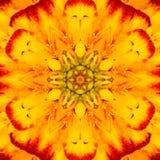 Κίτρινο ομόκεντρο Kaleidoscopic σχέδιο κεντρικού Mandala λουλουδιών Στοκ Εικόνες