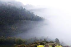 Κίτρινο λουλούδι βιασμών την άνοιξη στη βουνοπλαγιά, κάλυψη ομίχλης βουνών Στοκ Φωτογραφίες