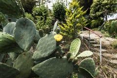 Κίτρινο λουλούδι κάκτων Στοκ εικόνες με δικαίωμα ελεύθερης χρήσης