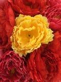 Κίτρινο λουλούδι μεταξύ του κοκκίνου Στοκ Φωτογραφία