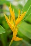 Κίτρινο λουλούδι με τα πράσινα φύλλα Στοκ εικόνες με δικαίωμα ελεύθερης χρήσης