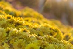 Κίτρινο λουλούδι με τη κλίση Στοκ εικόνα με δικαίωμα ελεύθερης χρήσης