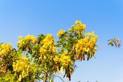 Κίτρινο λουλούδι στην εκλεκτική εστίαση δέντρων Στοκ φωτογραφία με δικαίωμα ελεύθερης χρήσης