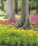 Κίτρινο λουλούδι στον κήπο Στοκ Εικόνες