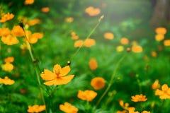 Κίτρινο λουλούδι στο δέντρο Στοκ φωτογραφία με δικαίωμα ελεύθερης χρήσης