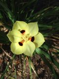 Κίτρινο λουλούδι Στοκ εικόνα με δικαίωμα ελεύθερης χρήσης