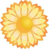 Κίτρινο λουλούδι Απεικόνιση αποθεμάτων