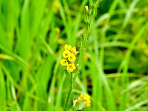 Κίτρινο λουλούδι Στοκ Φωτογραφίες