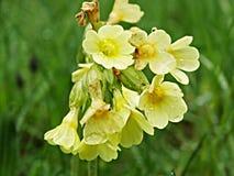 Κίτρινο λουλούδι Στοκ φωτογραφία με δικαίωμα ελεύθερης χρήσης