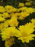Κίτρινο πάρκο λουλουδιών Στοκ φωτογραφία με δικαίωμα ελεύθερης χρήσης