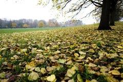 Κίτρινο πάρκο Στοκ εικόνες με δικαίωμα ελεύθερης χρήσης