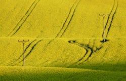 Κίτρινο πεδίο 1 Στοκ φωτογραφία με δικαίωμα ελεύθερης χρήσης