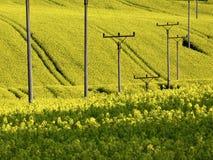 Κίτρινο πεδίο 2 Στοκ φωτογραφίες με δικαίωμα ελεύθερης χρήσης