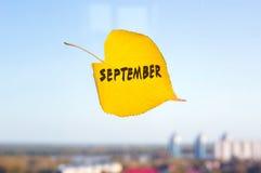 Κίτρινο πεσμένο φύλλο επονομαζόμενο SEP που κολλιέται στο παράθυρο Στοκ Εικόνα