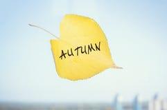 Κίτρινο πεσμένο φύλλο επονομαζόμενο SEP που κολλιέται στο παράθυρο Στοκ εικόνες με δικαίωμα ελεύθερης χρήσης