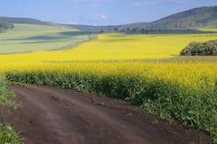 Κίτρινο πεδίο στοκ εικόνα με δικαίωμα ελεύθερης χρήσης