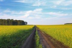 Κίτρινο πεδίο στοκ φωτογραφίες