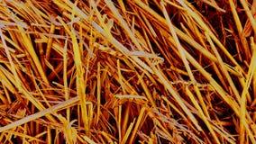 Κίτρινο πορτοκαλί υπόβαθρο από το ξηρό άχυρο σίτου στοκ φωτογραφία