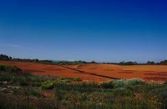 Κίτρινο πορτοκαλί χώμα στο πάρκο ερήμων στην Αυστραλία στοκ εικόνα με δικαίωμα ελεύθερης χρήσης