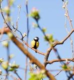 Κίτρινο πουλί σε ένα δέντρο Στοκ εικόνες με δικαίωμα ελεύθερης χρήσης