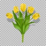 Κίτρινο πρότυπο λουλουδιών τουλιπών άνοιξη απεικόνιση αποθεμάτων