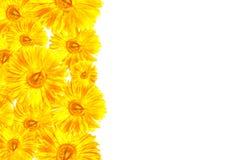 Κίτρινο πλαίσιο Gerbera Στοκ εικόνα με δικαίωμα ελεύθερης χρήσης