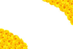 Κίτρινο πλαίσιο Gerbera Στοκ φωτογραφία με δικαίωμα ελεύθερης χρήσης