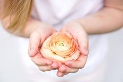 Κίτρινο ρόδινο λουλούδι στα χέρια παιδιών s στο ελαφρύ υπόβαθρο στοκ φωτογραφίες με δικαίωμα ελεύθερης χρήσης