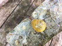 Κίτρινο σαλιγκάρι Στοκ Εικόνες