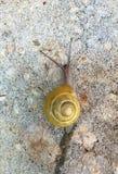 Κίτρινο σαλιγκάρι Στοκ φωτογραφία με δικαίωμα ελεύθερης χρήσης
