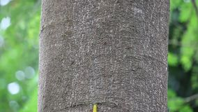 Κίτρινο σκουλήκι στο δέντρο απόθεμα βίντεο