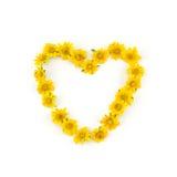 Κίτρινο στεφάνι λουλουδιών Wedelia καρδιών Στοκ φωτογραφία με δικαίωμα ελεύθερης χρήσης