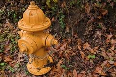 Κίτρινο στόμιο υδροληψίας πυρκαγιάς το φθινόπωρο στοκ εικόνες