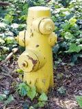 Κίτρινο στόμιο υδροληψίας πυρκαγιάς Στοκ εικόνες με δικαίωμα ελεύθερης χρήσης