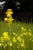 Κίτρινο στόμιο υδροληψίας Στοκ Εικόνες