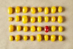 Κίτρινο σχέδιο ντοματών Μια κόκκινη ντομάτα συμπεριλαμβανόμενη Στοιχεία λαχανικών σχεδίου Στοκ εικόνες με δικαίωμα ελεύθερης χρήσης