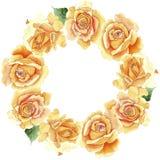 Κίτρινο τσάι-υβριδικό στεφάνι λουλουδιών τριαντάφυλλων Wildflower σε ένα ύφος watercolor Στοκ Φωτογραφίες
