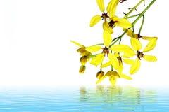 Κίτρινο υπόβαθρο λουλουδιών Στοκ φωτογραφία με δικαίωμα ελεύθερης χρήσης
