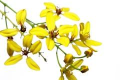 Κίτρινο υπόβαθρο λουλουδιών Στοκ Εικόνες