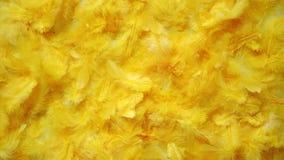 Κίτρινο υπόβαθρο φτερών Επίπεδος βάλτε απόθεμα βίντεο