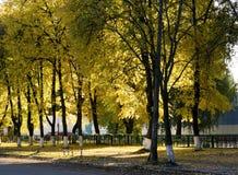 Κίτρινο φθινόπωρο στη μητρόπολη στοκ εικόνες