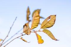 Κίτρινο φθινόπωρο φυλλώματος Στοκ Φωτογραφίες
