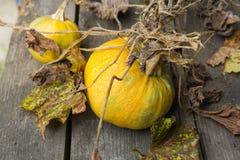 Κίτρινο φθινόπωρο στοκ φωτογραφίες με δικαίωμα ελεύθερης χρήσης