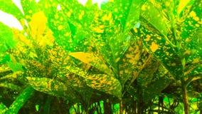 Κίτρινο φυτό στοκ φωτογραφίες με δικαίωμα ελεύθερης χρήσης