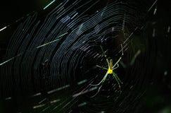 Κίτρινο φως πλαισίων αραχνών και ιστών αράχνης Στοκ Φωτογραφίες
